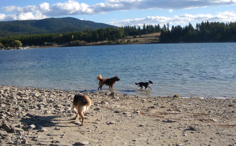 Dog Island at Riley Creek Campground
